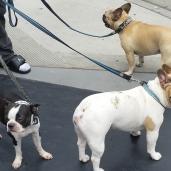 dogs-bt-fbd